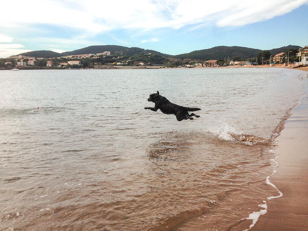 Ein Hechtsprung ins Wasser